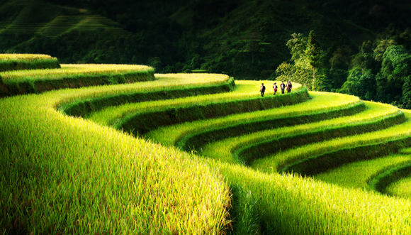 Rice-Field-Terrace-Northern-Vietnam-by-Bsam